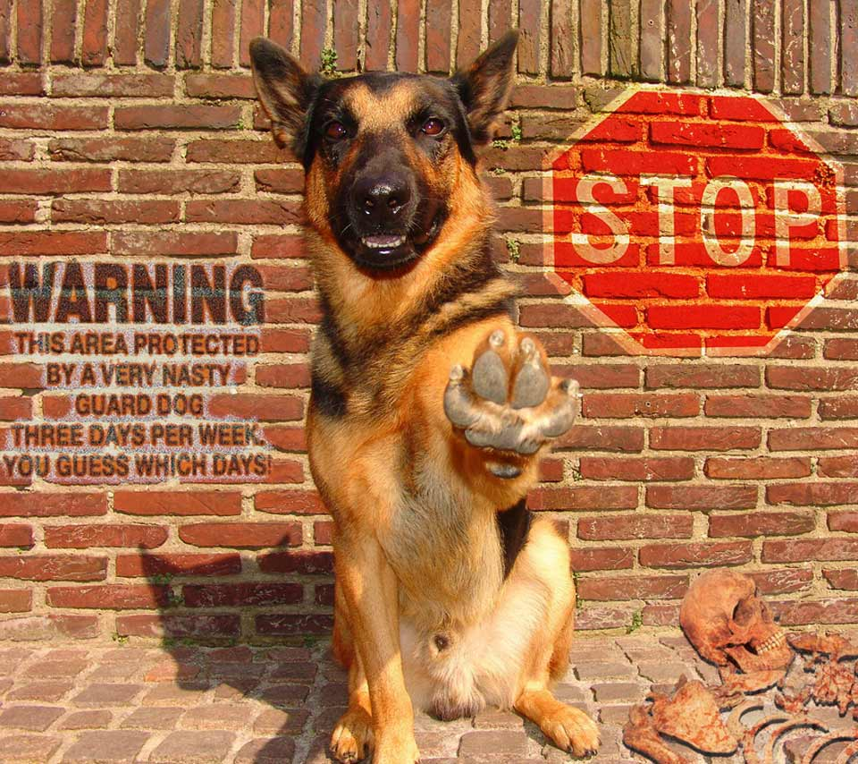 Guide to Choosing a Dog for Security