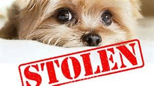 Ten Thoughtful Tips to Thwart Pet Theft