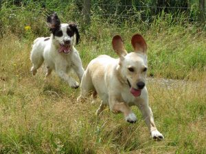 Legal Responsibilities of Dog Owners