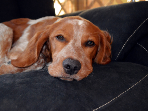 Home is where the hound is:  Finding the Perfect Home for Your Dog